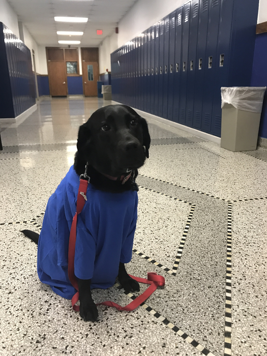 Nala our Therapy Dog showing her Tribe Pride